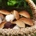 Vendita funghi porcini, consigli per l'uso