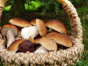 Vendita funghi porcini